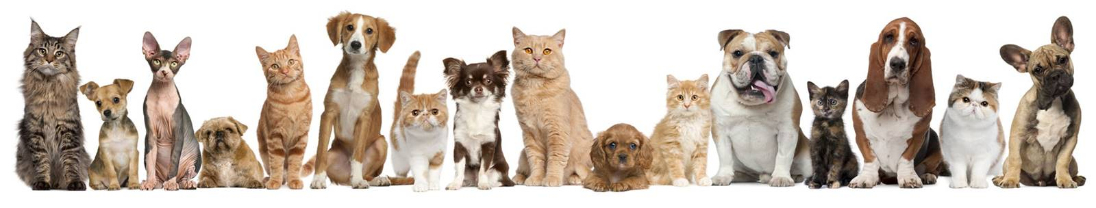 Pet Breeders Wichita Kansas - Local Pet Breeders com Wichita